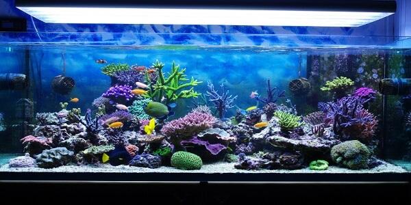 Jenis Ikan Hias Air Tawar Dan 7 Faktanya Ikan Hias Aquarium