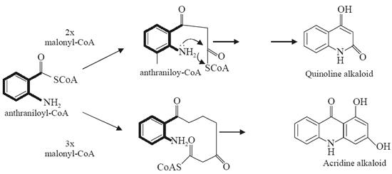 acridine-ring-system