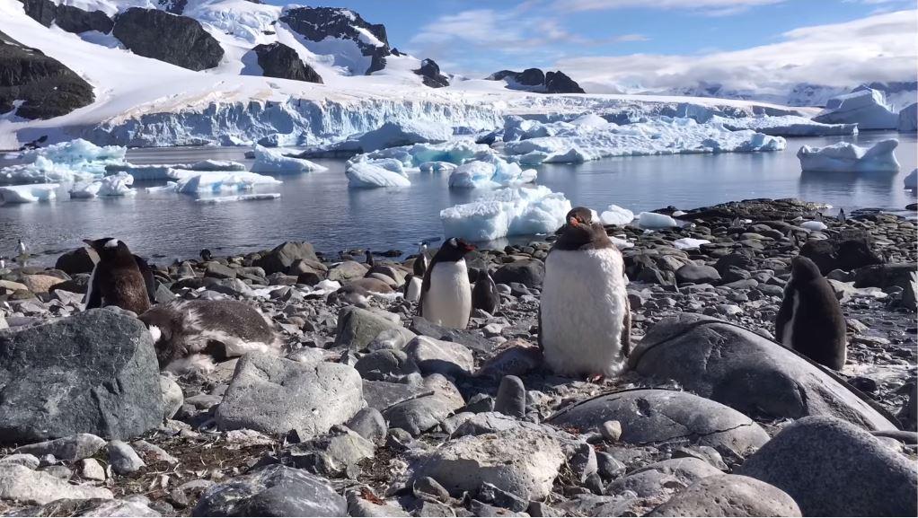 Canzone Pubblicità iPhone | Spot con Pinguini | Giugno 2016