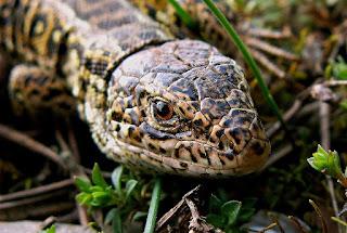 Cabeça de um réptil - Nomes científicos de animais: Répteis
