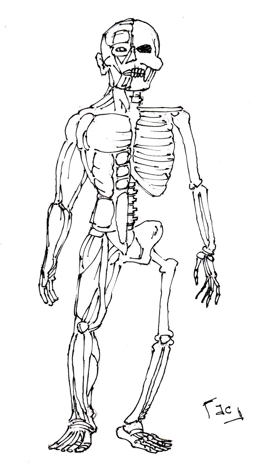Anatomy Muscle Coloring Coloring Pages