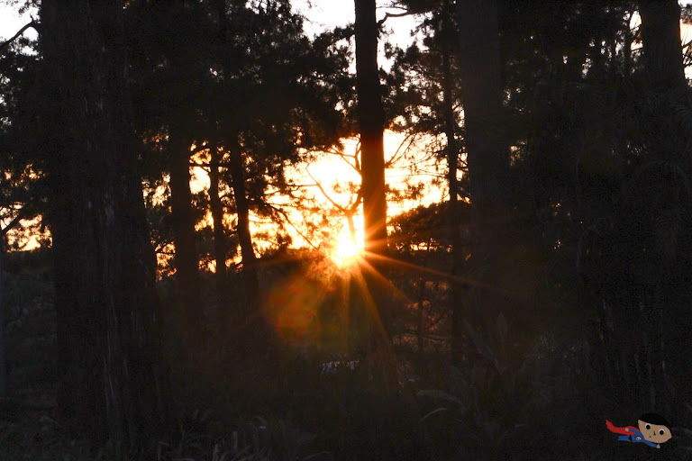 Sunset in Forest - Baguio nature photography
