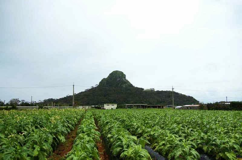 Mt. Gusuku, Mt. Tachu,island, tobacco fields