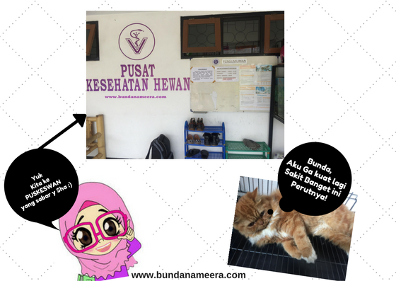 puskeswan cimahi, puskeswan, kucing sakit, vaksin kucing, pengobatan kucing