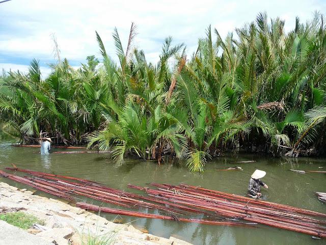 Balade à vélo dans la campagne H'hoi An au Vietnam, coconut grove