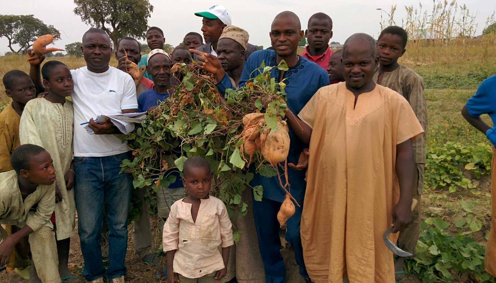 "Image result for A nutritious sweet potato variety is growing in popularity and becoming an important strategy to improve vitamin A deficiency across Uganda. Orange-fleshed sweet potato (OFSP) is rich in vitamin A and is being disseminated with support from USAID under Feed the Future, the U.S. Government's global hunger and food security initiative. OFSP has now been adopted by over 55,000 Ugandan farming households, with up to 237,000 households expected to be planting and eating it by 2018. In November 2013, the Government of Uganda released two more varieties of this potato, bringing the total number to six. The potato was Introduced in 2007 by HarvestPlus, a part of the Consultative Group on International Agricultural Research (CGIAR) Program on Agriculture for Nutrition and Health. USAID is working in Uganda to improve household nutrition and agricultural livelihoods through production and consumption of these bio-fortified sweet potatoes. Bio-fortification aims to reduce micronutrient deficiency through traditional breeding of certain crops that contain higher levels of essential micronutrients. ""Uganda was selected to pilot OFSP breeding and dissemination because sweet potato is grown by over 44 percent of Ugandan farmers and is the fourth most important staple food in the country,"" explained Anna-Marie Ball, HarvestPlus country manager for Uganda. Vitamin A deficiency is a significant health concern in the country, impacting 38 percent of children age 6 months to 59 months and 36 percent of women age 15 to 49 years, according to the 2011 Uganda Demographic and Health Survey. The deficiency is rampant in sub-Saharan Africa, affecting 43 million children under age 5, and contributing to high rates of blindness, disease and premature death in children and pregnant women. Lack of vitamin A also impedes children's growth, increases their vulnerability to disease, and contributes to poor immune function and maternal mortality. Recent figures released by the International Potato Center(link is external) indicate that OFSP is an important source of beta-carotene, the pre-cursor to vitamin A. Just 125 grams of a fresh sweet potato root from most orange-fleshed varieties contains enough beta-carotene to provide the daily provitamin A needs of a preschooler. Charles Musoke, a Seed Systems specialist working with HarvestPlus Uganda, explained that the orange-fleshed sweet potato is cross-bred with local potato varieties. In addition to addressing vitamin A deficiencies, it is as sweet as the indigenous white sweet potato, and has high and fast-maturing yields. Agricultural extension staff work closely with farmers' groups and other parties to ensure widespread OFSP availability and sustainability. Ball believes that if enough people receive the vines, plant them, and take good care of them, the bio-fortified OFSP variety can become well-established across Uganda. Schools around Uganda that grow potatoes in their gardens as a main crop have shown interest in OFSP. ""In Kole district, students of Aboke Girls' Primary School are focusing on orange-fleshed sweet potatoes with the aim of multiplying the vines. The aim is to multiply them so that each student can have sufficient quantities to take home for their parents to plant extensively,"" said Odong Stephen, a field extension worker with World Vision Uganda. Kyalisiima Kate, a project coordinator with Caritas Development Organization, explains that people are interested in growing OFSP mainly for home consumption. ""In Kibaale district, 53 pupils of Buruku Primary School and 18 from Rwentale Primary School actively took part in the planting of OFSP in their respective gardens. While the teachers ate the roots, the pupils carried the vines for their parents to plant at home,"" she said. HarvestPlus provides information and training to farmers on how to conserve the potato vines from season to season. Nutrition training is also offered to the farmers. Families learn how to prepare the potatoes, which contribute to the nutritional needs of young children and pregnant and breastfeeding women, as a component of a balanced diet. ""Our beneficiaries are sensitized about the range of food preparation approaches. Besides steaming and boiling, families make flour from the orange potatoes, which, in combination with wheat flour and other ingredients, can be used to make chapatti, donuts and porridge."" said Ball. With support from USAID, HarvestPlus is proactively working to link OFSP farmers to markets. Through personal connections, traders are educated about the nutritional benefits of OFSP and rapport is being built between the OFSP farmers and traders. HarvestPlus is also working with larger, commercial farmer groups (those who plant the OFSP on more than 1 acre of land) around Kampala, Mbarara, Mbale and Gulu districts and relies on their existing hubs for marketing. This ensures that OFSP gets to the market so everyone can access them, holding much promise for both farmers and families as the crop's popularity grows in Uganda. File Attachment Approved (BFS, AFR) Orange-fleshed Sweet Potatoes in Uganda_Final.docx RELATED STORIES Ensuring Equal Rights to Land in Northern Uganda Last updated: February 12, 2016 SHARE THIS PAGE"