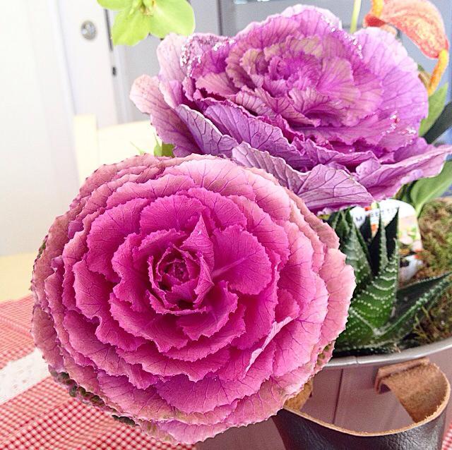 Vita da fiori gennaio 2016 for Fiori ornamentali