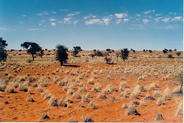 Deserto do Kalahari - África