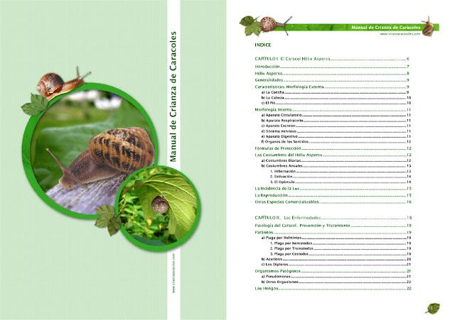 Manual de cría de caracoles