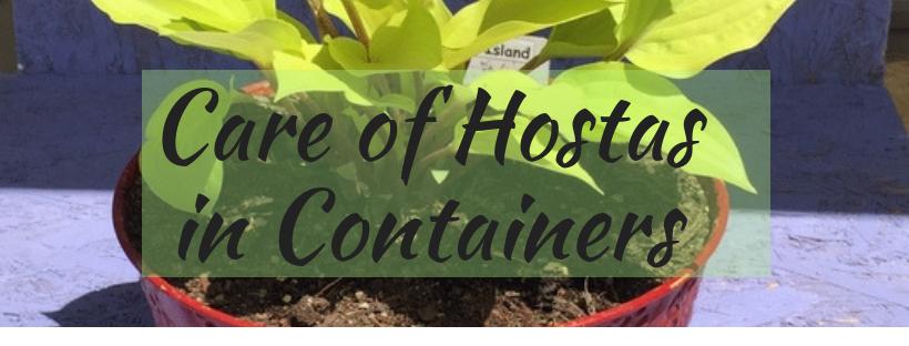 Sunset Hosta Farm com: All About Hostas -- Hostas 101