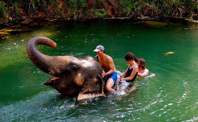 Elephant stay: explore the world of the elephant