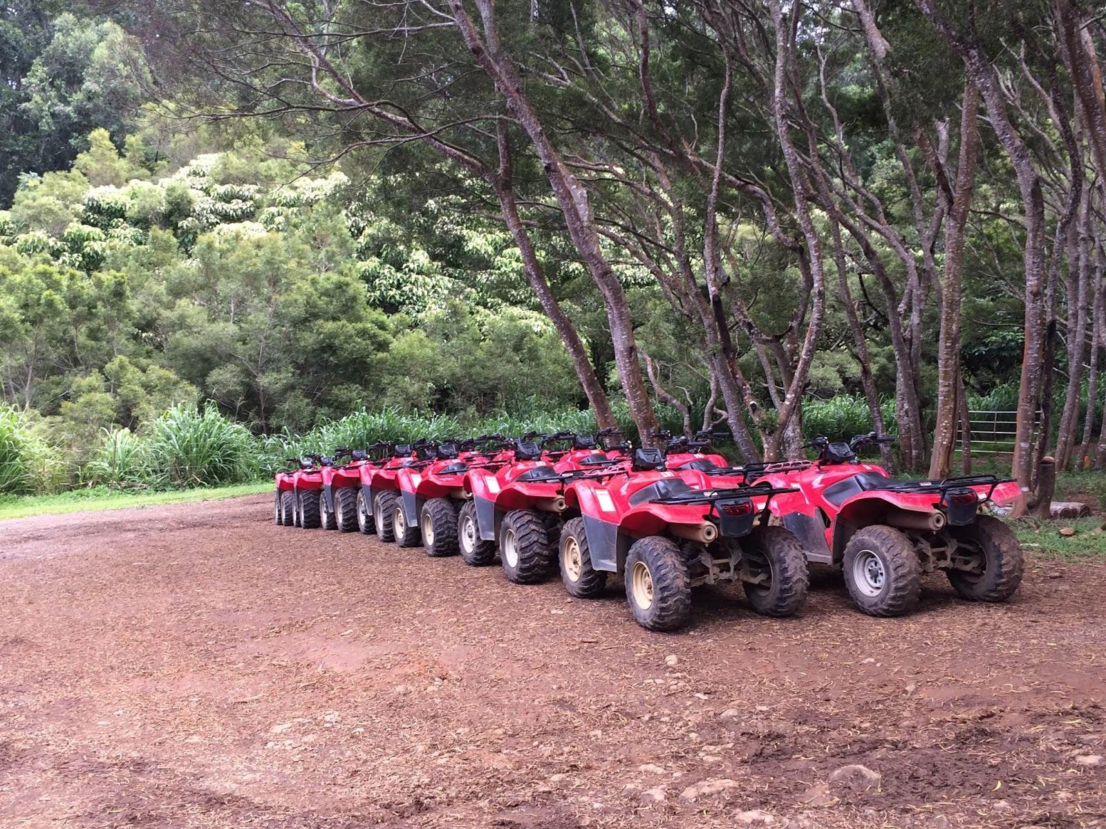 Family Travel Blog : Four wheeling adventure atop Waipio Valley, Big