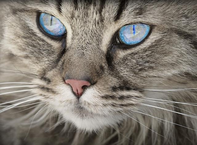 OKIEM ŻYWICIELA: Chciałbym być kotem