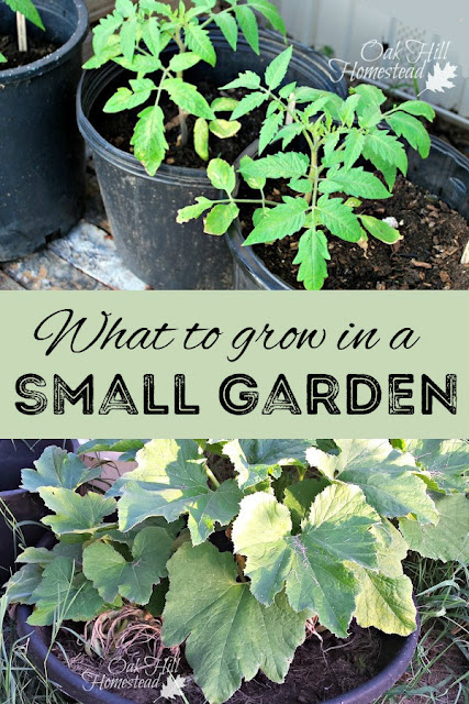 Are you held back by a small yard or an apartment balcony? Here's what you can grow in a small garden.