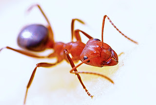 Remove ants from Nikon D90 DSLR