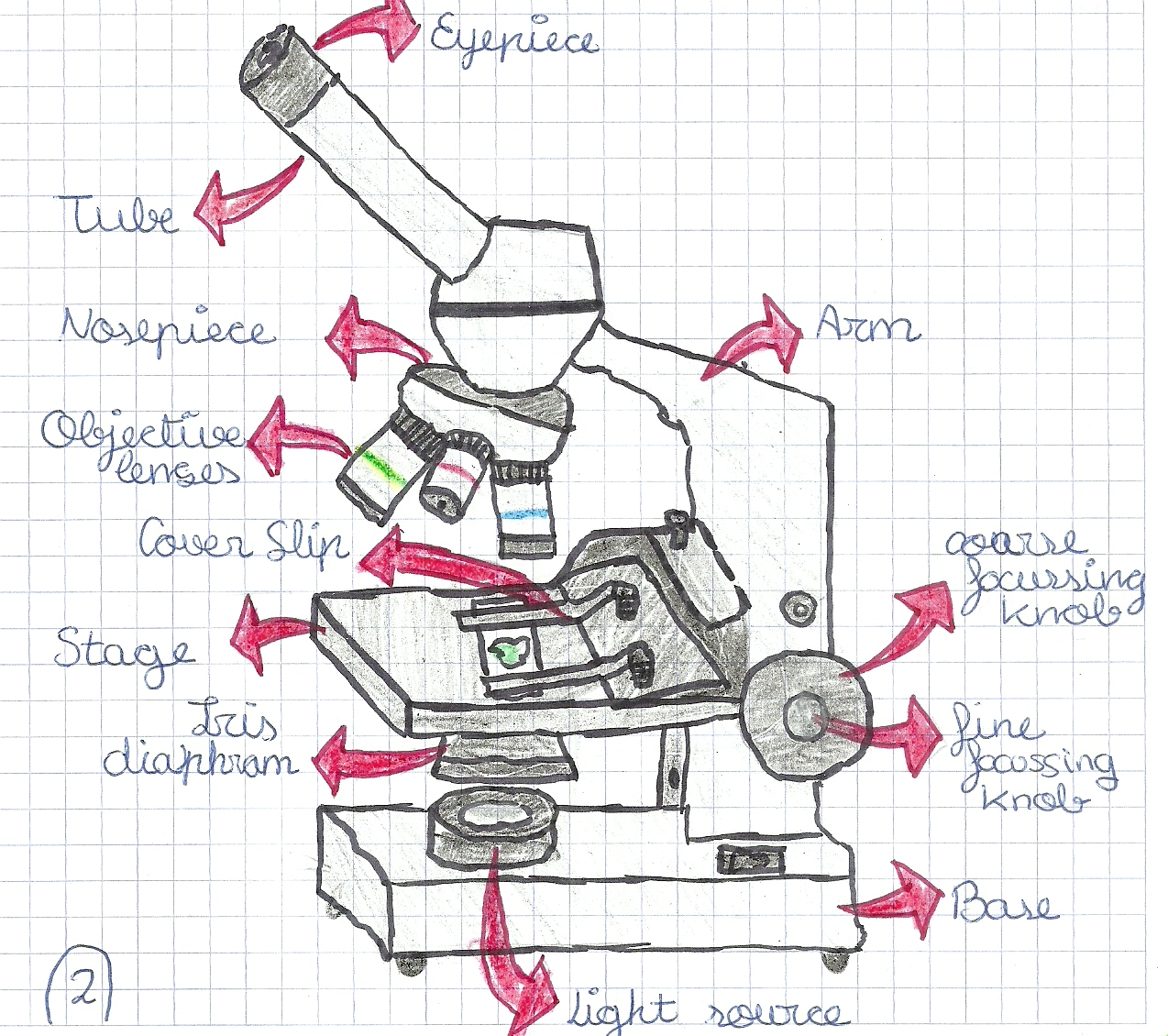 Blog De Aula De 1o 2o Eso Ies T M Using The Microscope