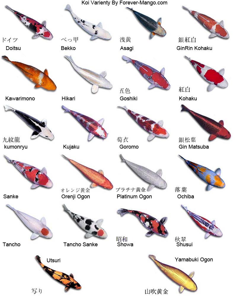 Fish Pictures   Exotic Ornamental Fish Photos With Names   Fish