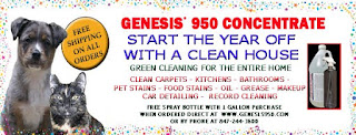 Best Stain remover For Pet Stains