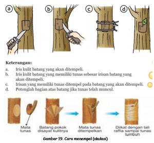 Sistem Reproduksi Pada Tumbuhan