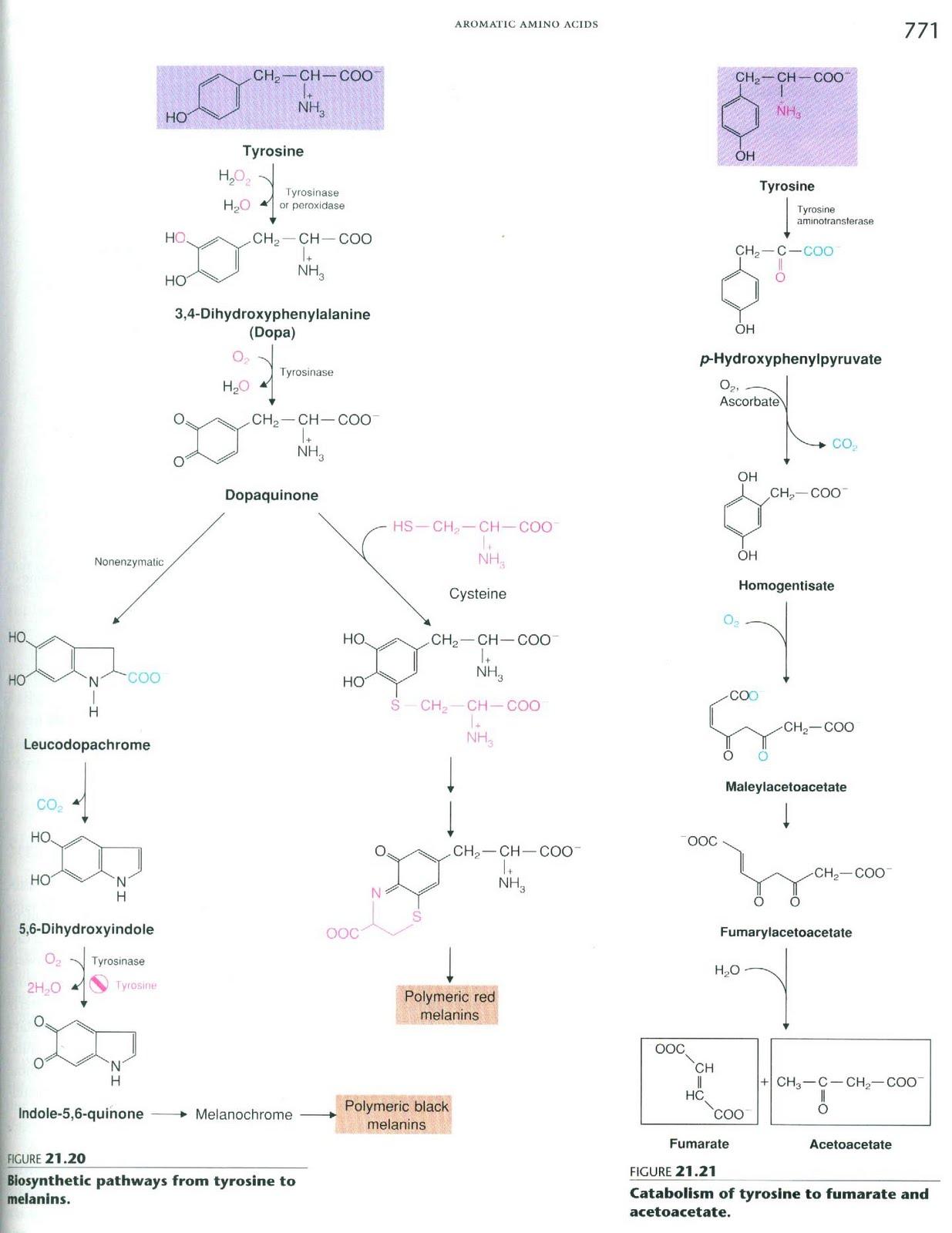 Kimia anorganik penting dipelajari, karena bukan hanya sebagai sains dasar tetapi juga sebagai salah satu dasar dari berbagai teknologi modern. KIMIA INDONESIA: MELANIN