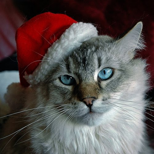Free Hd Wallpapers Funny Animals Christmas Pictures And Funny