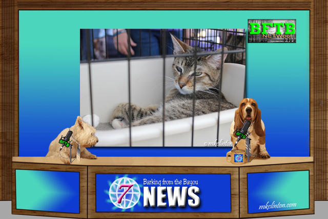 BFTB NETWoof News report on Rally the cat and the St. Louis Cardinals