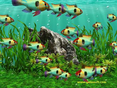 Aquarium fish Free Photos for free download