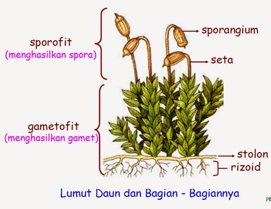 Biologi Gonzaga Test Kingdom Plantae 01