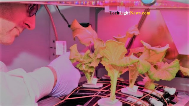 growing cabbage in space,growing vegetable,Space Cabbage Main,Space Cabbage,vegetable,growing vegetable in space,vegetable nasa,nasa,nasa news,NASA,space,iss,international space station,tech news,latest technology,new technology,latest technology news,technology,technews,information technology,news,technews,techlightnews,science tech,world news,science news,science tech