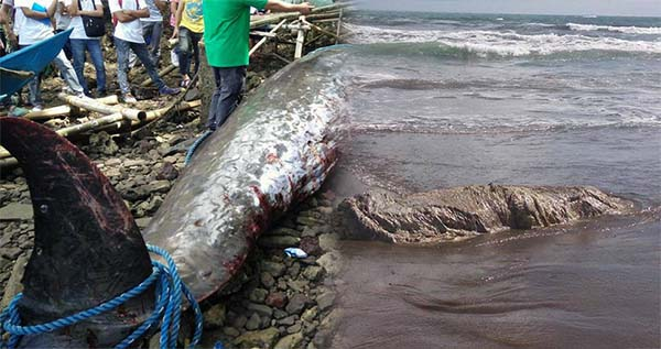 More strange creatures found dead in the Philippines