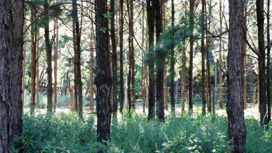 Bosques Frios