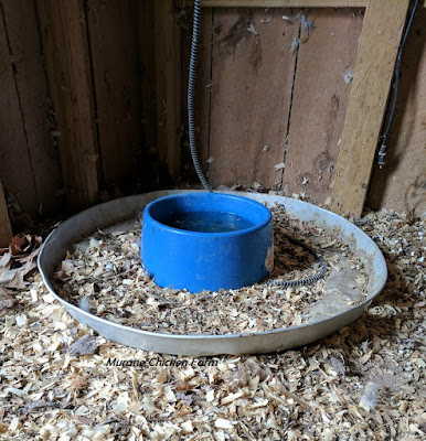 pan under water bowl in chicken coop