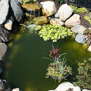 green water algae backyard pond