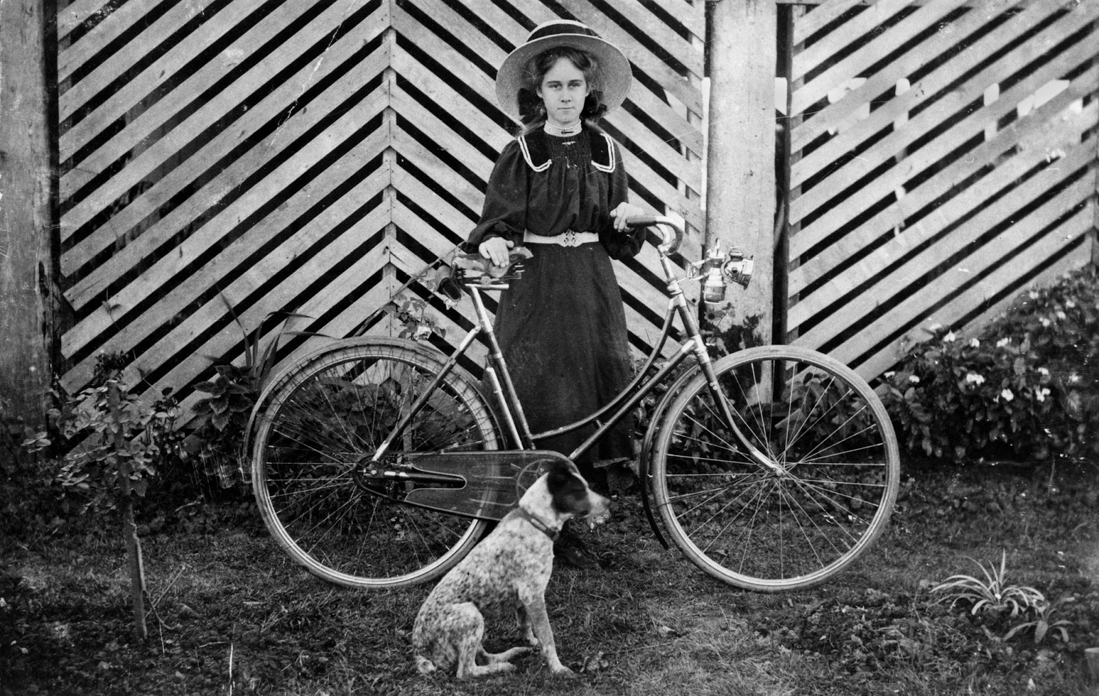 Girl, Bicycles and Dogs