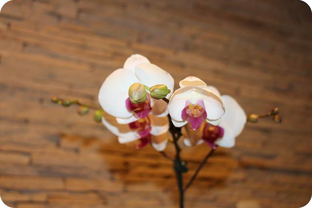 Detalhes Orquídea : Decoração do Jantar Dia dos Namorados