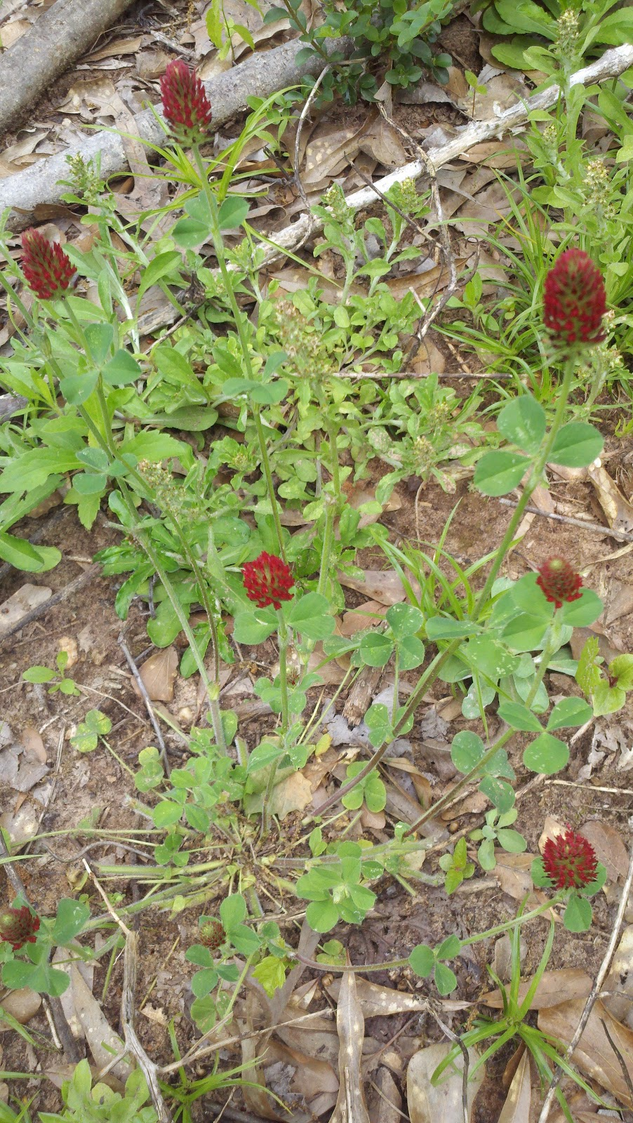 The Clover Beauty Inn Notd Blue Glitter Leopard Print: The Dewberry Blog: CLOVER, RED AND WHITE
