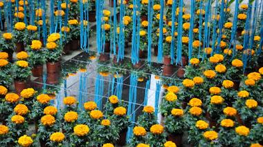 Girona Temps de Flors. Flores en monumentos, patios y jardines