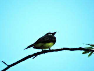Pássaro em Árvore da Praça Araguaia - Vila Assunção, Porto Alegre