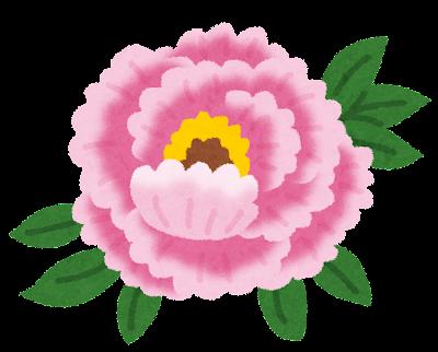 牡丹のイラスト(花)