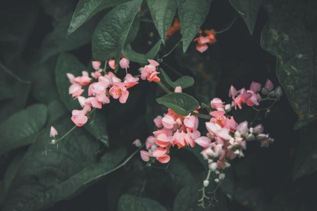 Pingin Rumah Adem Tanpa AC, Tanam Saja 7 Bunga Indah Ini Dirumah Anda!