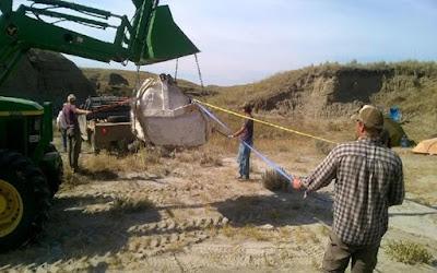 Tengkorak Besar T. Rex ditemukan di Montana