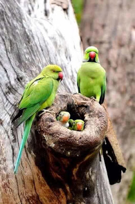 parrot-family-at-their-home