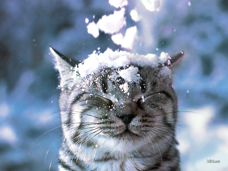 25 Cool Pictures of Cats in the Snow |Cat Snow Flakes