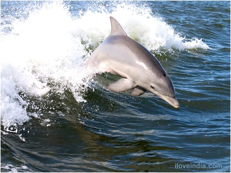 -The NARK news-: - 10 interesting facts about DOLPHINS