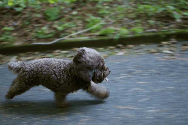 Cachorro correndo na rua