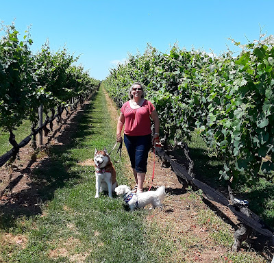 Quite a few wineries on Long Island allow dogs! Long Island's wine country, Pet friendly, Dog friendly