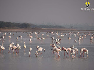 Pulicat Lake Bird Sanctuary Nellore
