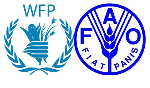 Image result for The United Nations Food and Agriculture Organization (FAO) and the World Food Programme (WFP) have reportedly launched a joint effort to support conflict-affected people in northeastern Nigeria to increase their food production and reduce dependence on food assistance.