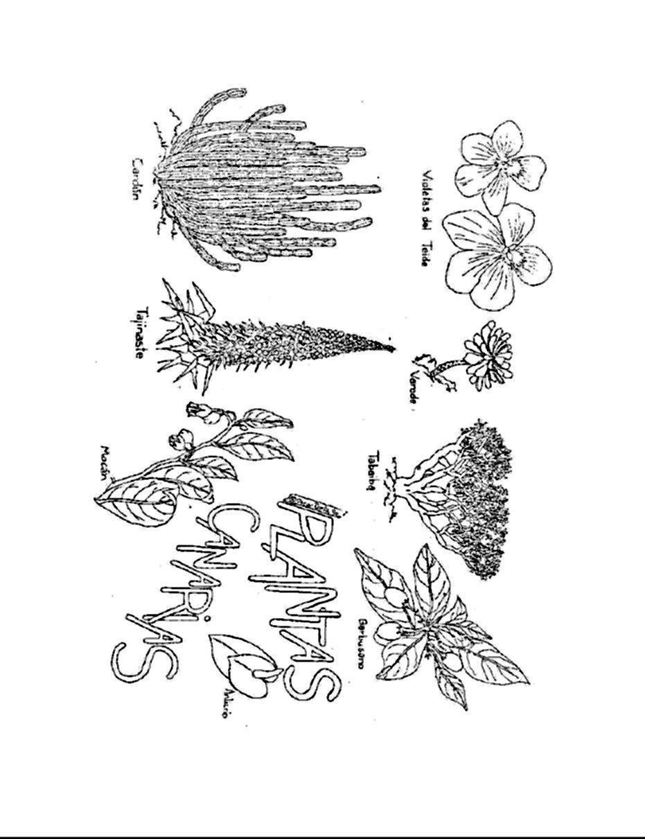 Flora de Canarias para colorear y Adeje   Colorear dibujos infantiles