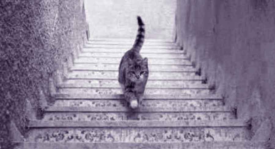 Test psicológico: ¿Qué está haciendo este gato?